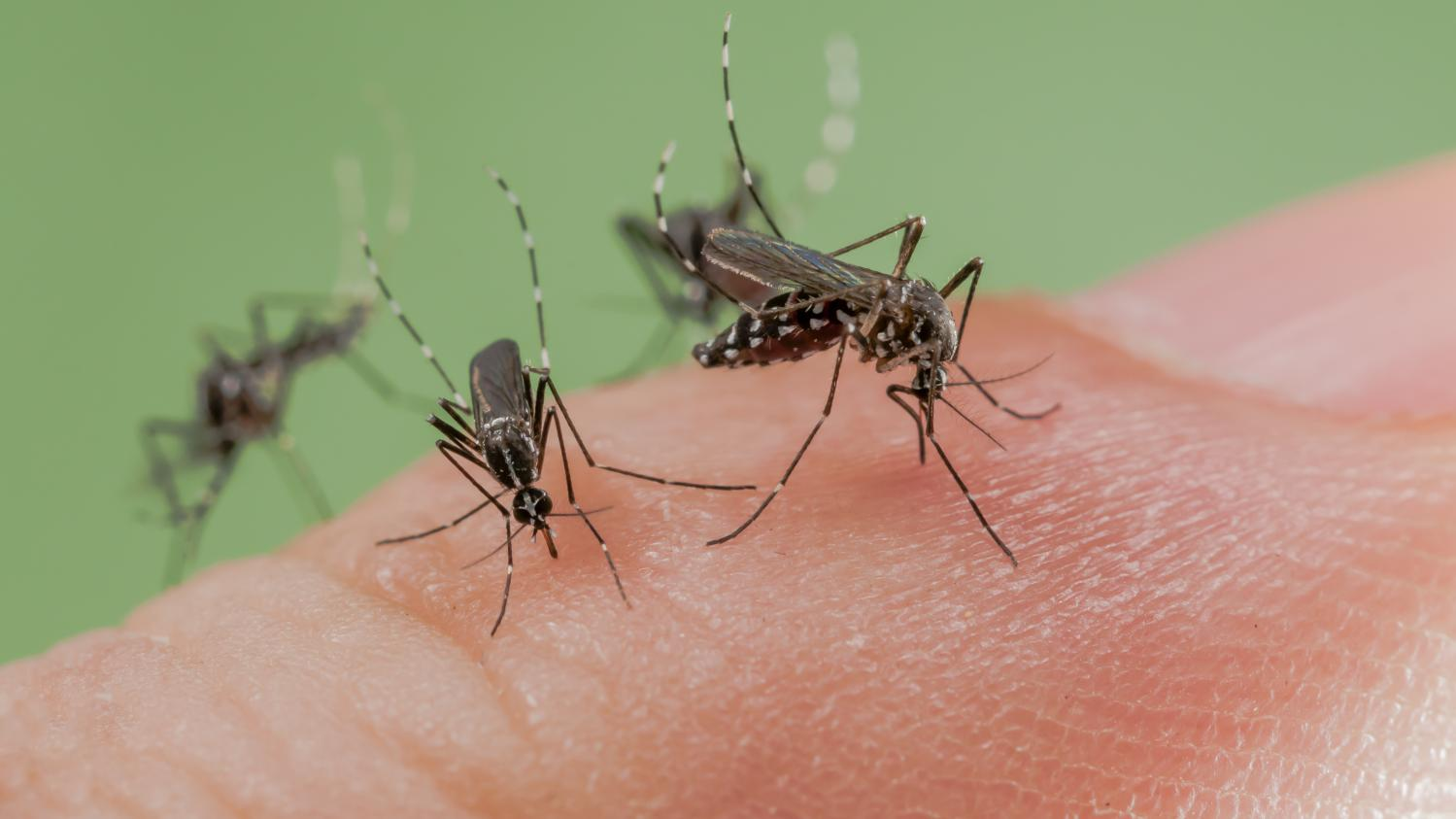 Alerte moustiques