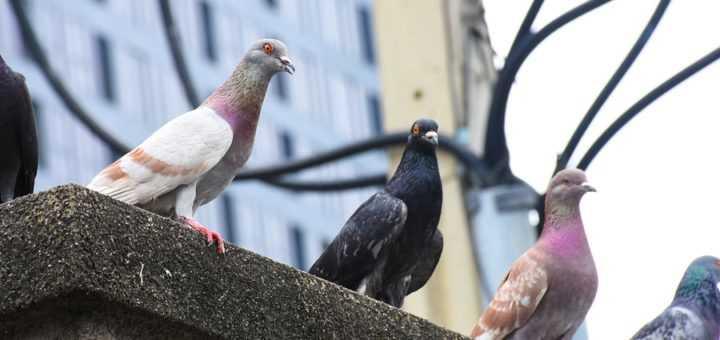 Fauconnerie et Lutte aviaire