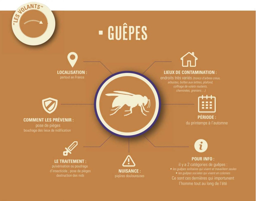 Guêpes / Frelons